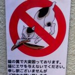 【東京猫スポット情報】弁当を狙いに来る猫のいる公園